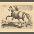 Spanish Horse Renaissance Engraving by Village Antiques