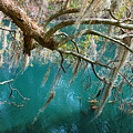 Spanish Moss And Emerald Green Water by Susanne Van Hulst