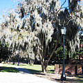 Spanish Moss  by Brittany Horton
