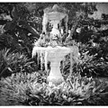 Spanish Moss Fountain With Bromeliads - Black And White by Carol Groenen
