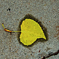 Spared Heart And Its All Yellow by Heidi Peschel