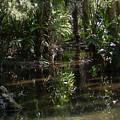 Sparkling Swamp by Ze DaLuz