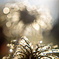 Sparkly Seedheads by Montez Sattman