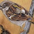 Sparrow 1 by Paul Bashore