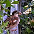 Sparrow In The Shrubs by William Lowe