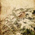 Sparrow In Winter I - Textured by Angie Tirado