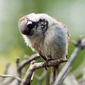 Sparrow Tilts It Head by Steve Somerville