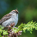 Sparrow With Lunch by Paul Freidlund