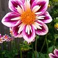 Special Flower by Caroline  Urbania Naeem