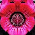 Special Flower by Pauline Dawkins