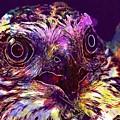 Sperber Raptor Plumage Bird Of Prey  by PixBreak Art