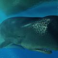 Sperm Whale by Daniel Eskridge