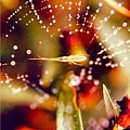 Spider And Spider Web by Debra Lynch