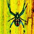 Spider by Daniele Smith