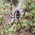 Spider by Dorion McFadden