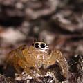 Spider Eyes by Joshua Bales