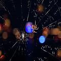 Spider by Joann Vitali