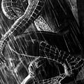 Spider-man by Stan Antonio