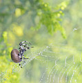 Spider On Web by Barbara Treaster