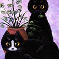 Spider Plant by Lisa  Adams