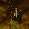 Spider by Sainuddeen Alanthi
