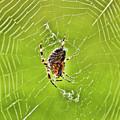 Spider by Sergey  Nassyrov