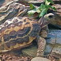 Spider Tortoise       Zoo    Indiana by Rory Cubel