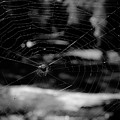 Spider Web Black White by Andrea Anderegg
