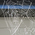 Spider Web by Cindy Kellogg