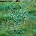 Spider Web In The Springtime by Douglas Barnett