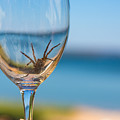 Spider Wine by Allegory Imaging