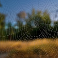 Spiderpane Window by Kevin Felts