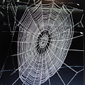 Spider's Web by Joyce Woodhouse