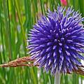 Spiky Blue by Maria Keady
