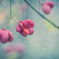 Spindle Tree by Elisabeth De vries