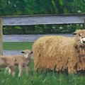 Sping Lambs by Paula Emery