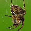 Spinning A Web by John Topman