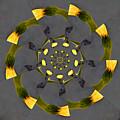 Spiraling Gerberas by Debra Martz