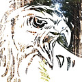 Spirit Animal . Hawk by John Jr Gholson