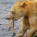 Spirit Bear Take Out  9636 by Karen Celella