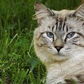 Spirit Cat by Justin Osborne