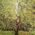Spirit Of An Oak by Stefan Duncan