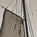 Spirit Of South Carolina Schooner Sailboat Sail by Dustin K Ryan