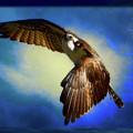 Spirit Of The Osprey  by Ola Allen