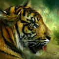 Spirit Of The Tiger by Carol Cavalaris