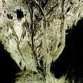 Spirit Tree by Paul W Faust -  Impressions of Light