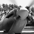 Spitfire Nose by Robert Phelan