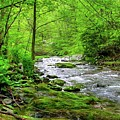 Spivey Creek by Judy Baird