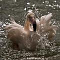 Splash by Angel Ciesniarska