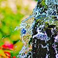 Splash by Don Baker